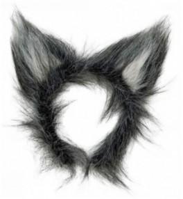 Hundi kõrvad